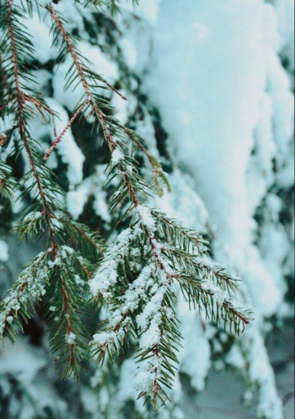Plimbare Iarna Bran Statiune