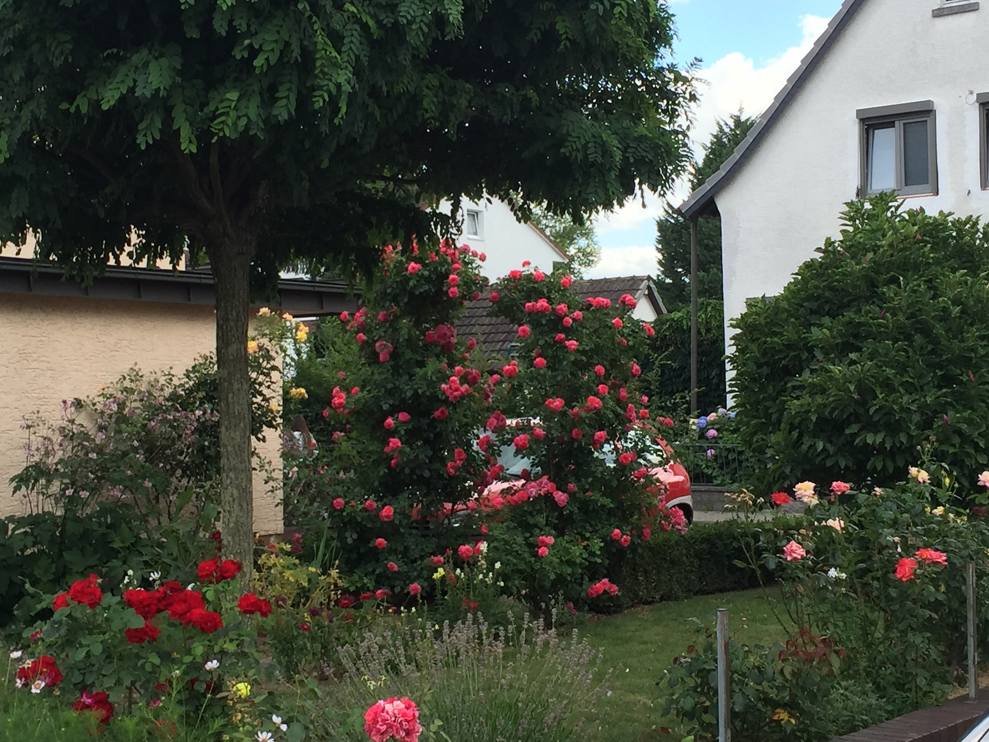 Strazi Flori Germania