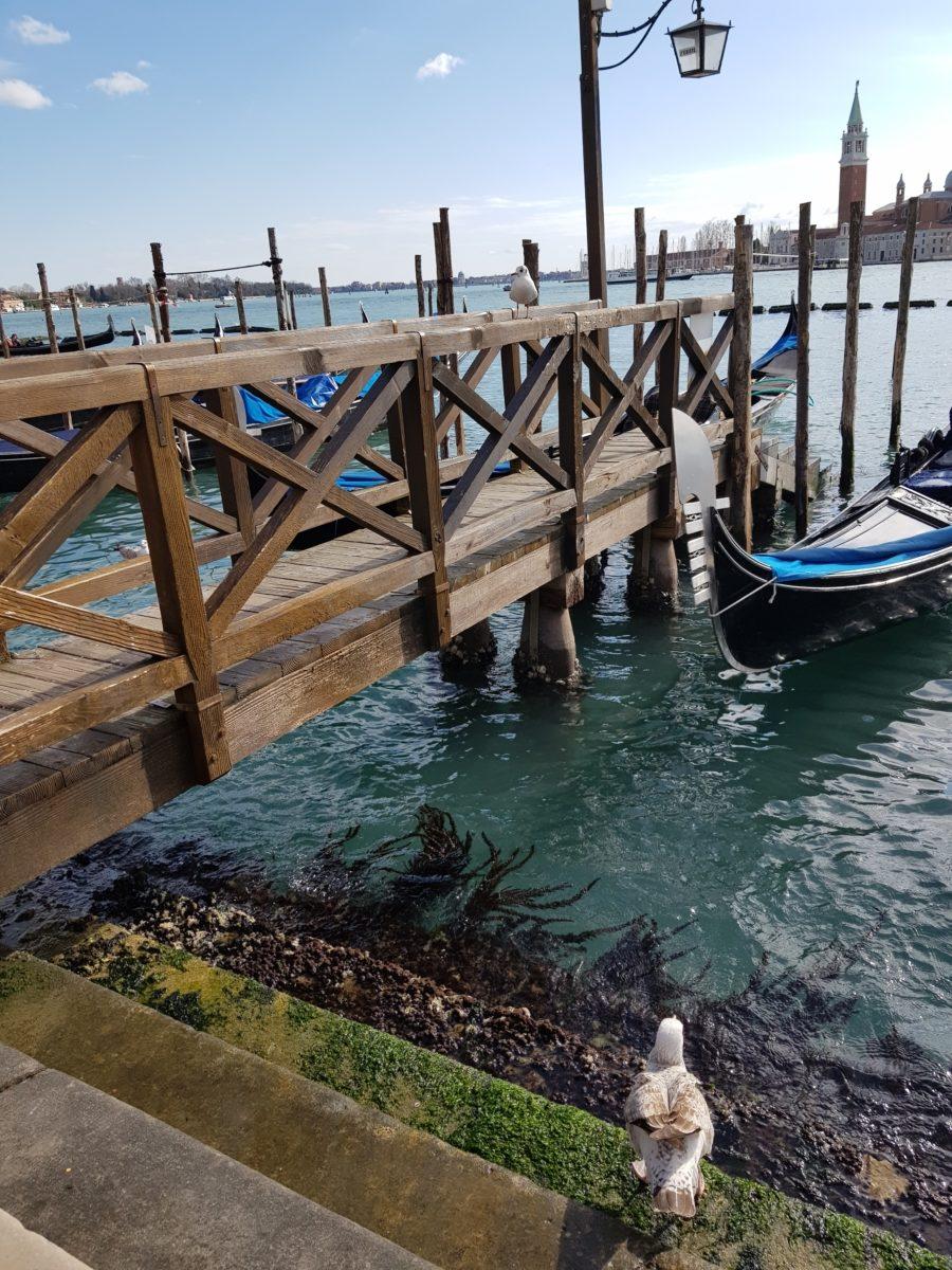 Pescarus Venetia