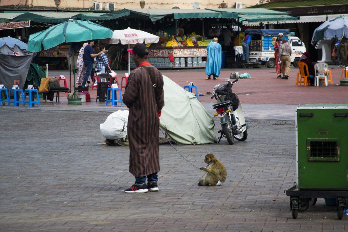 Maimuta Piata Marrakech