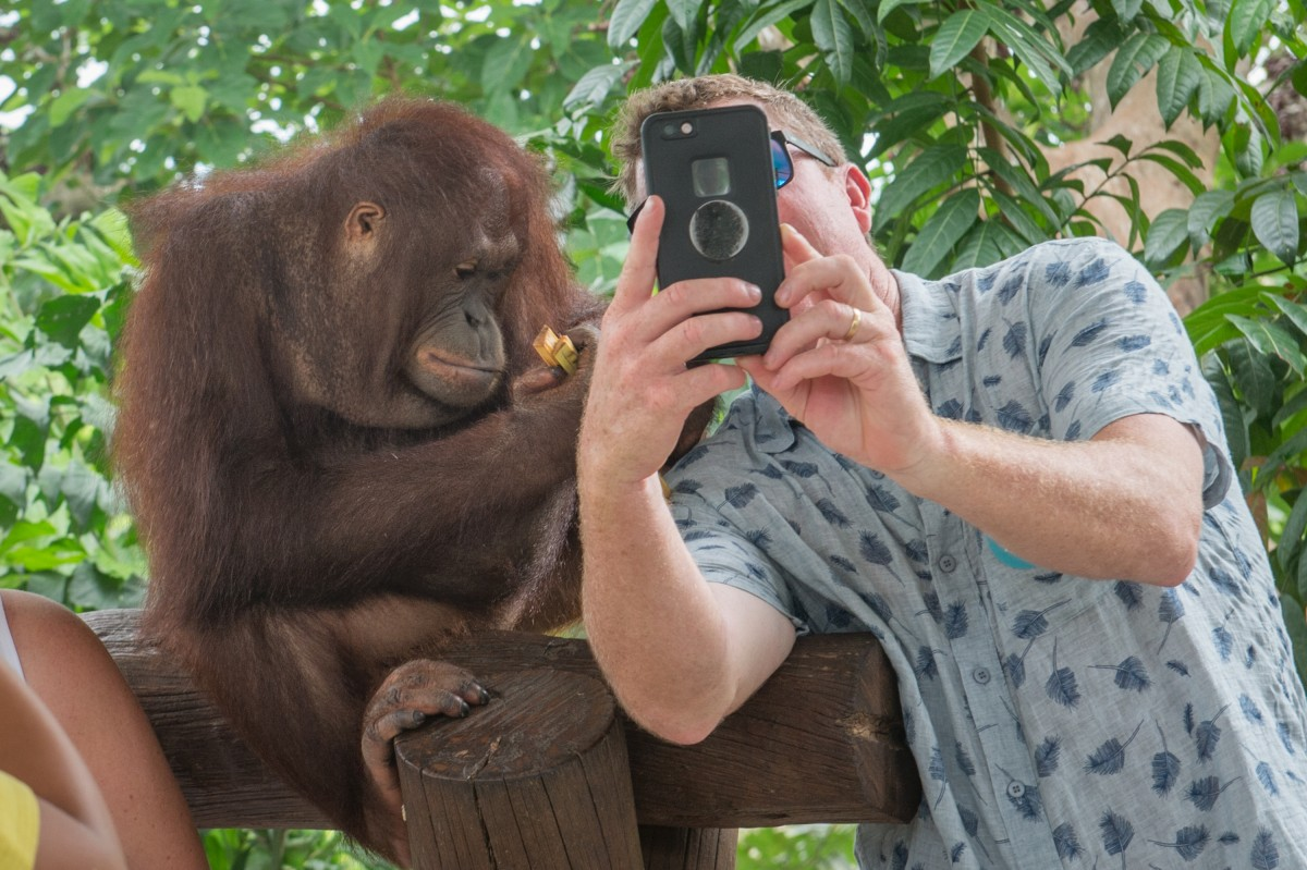 Exploatare Animale Turism