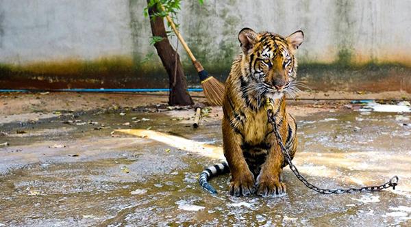Exploatarea animalelor in turism: o poza reusita pentru noi, o viata de suferinta pentru ele!