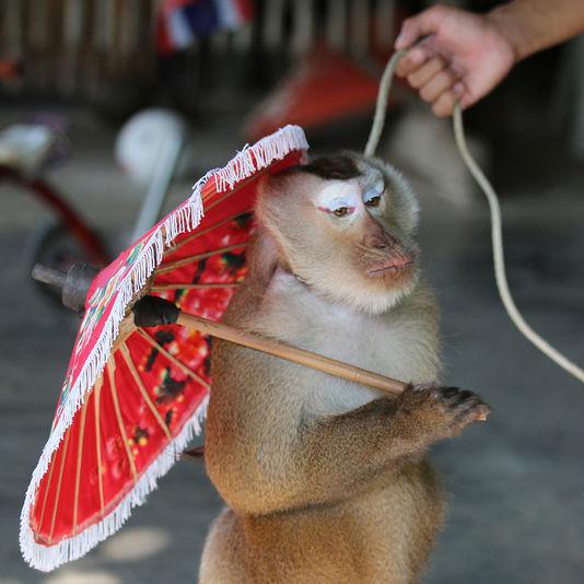 Maimute Turism Exploatare