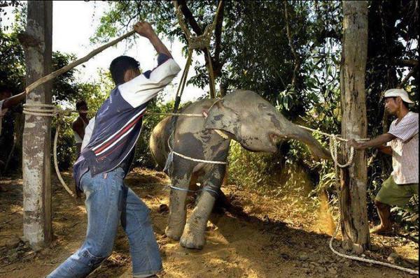 Violenta Animale Turism