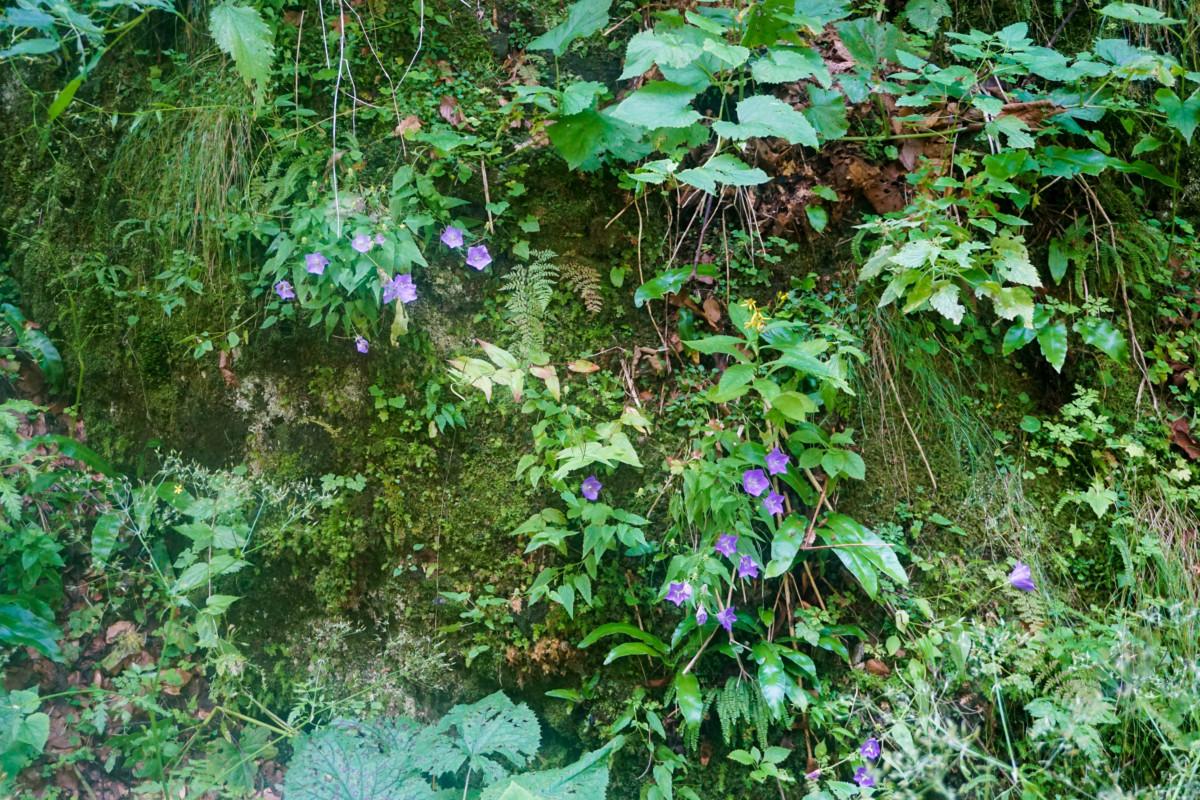 Flori Padure Canion