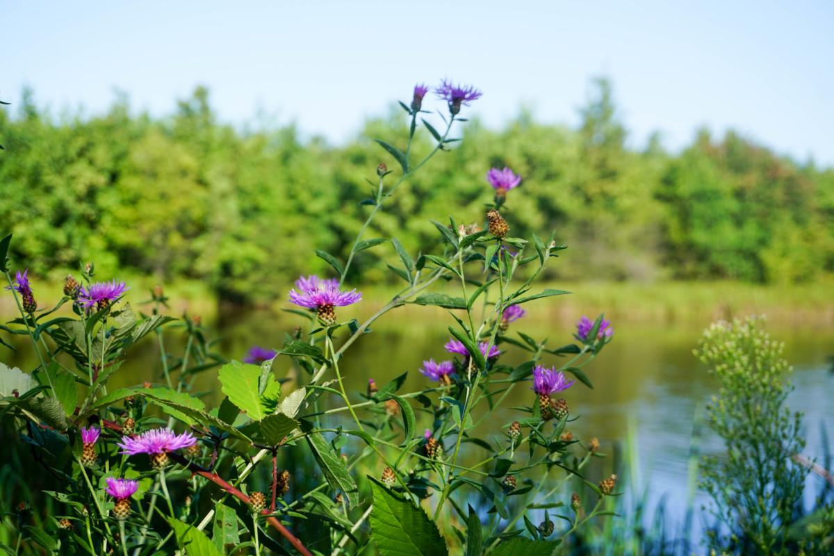 Poze Lac Targoviste