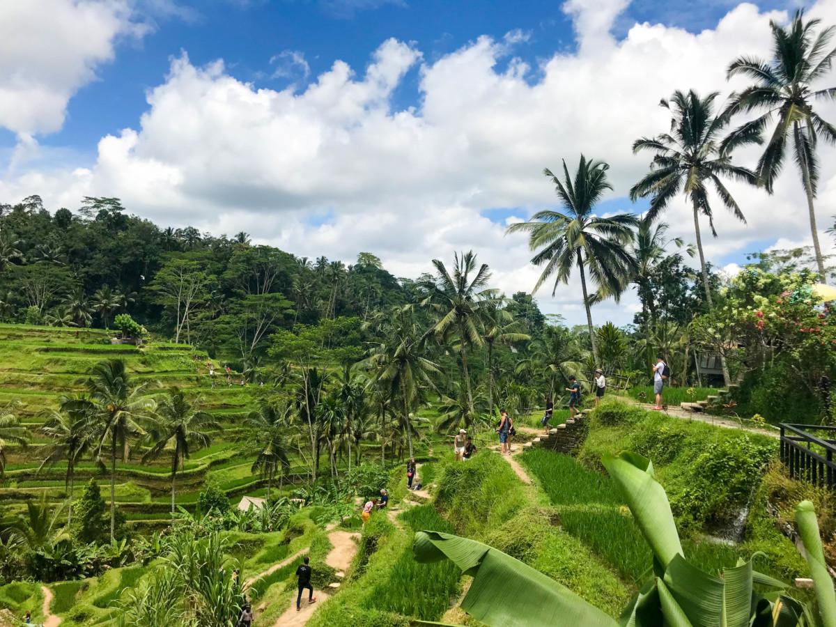 Bali Palmieri Terase