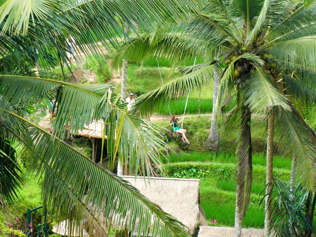 Bali Swings Poze