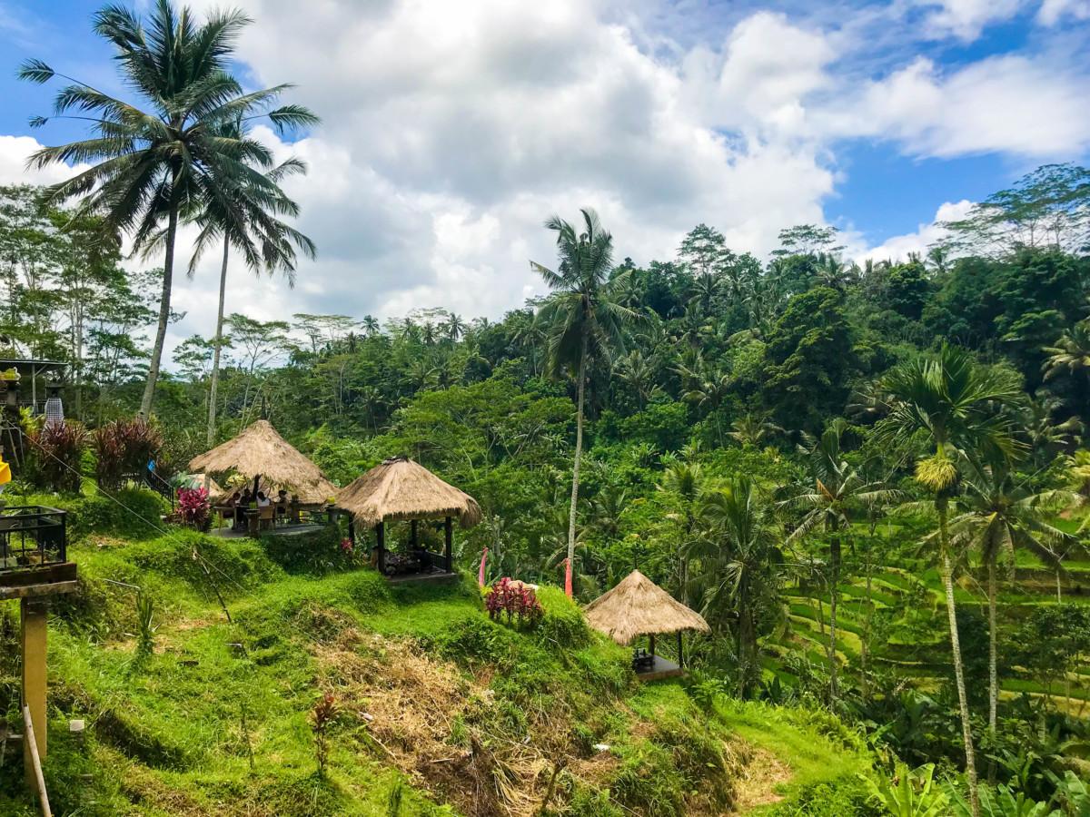 Bali Tegallalang Orez