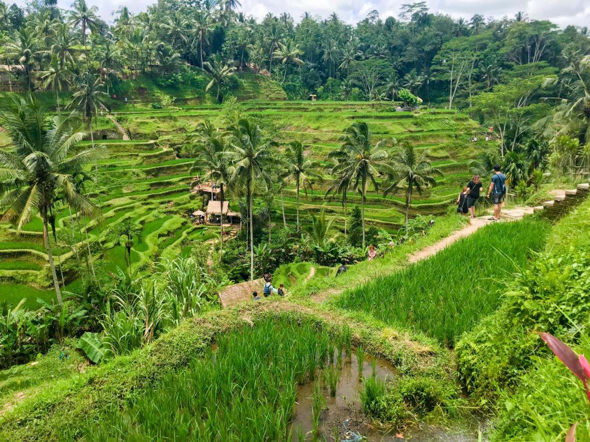 Bali Terase de Orez
