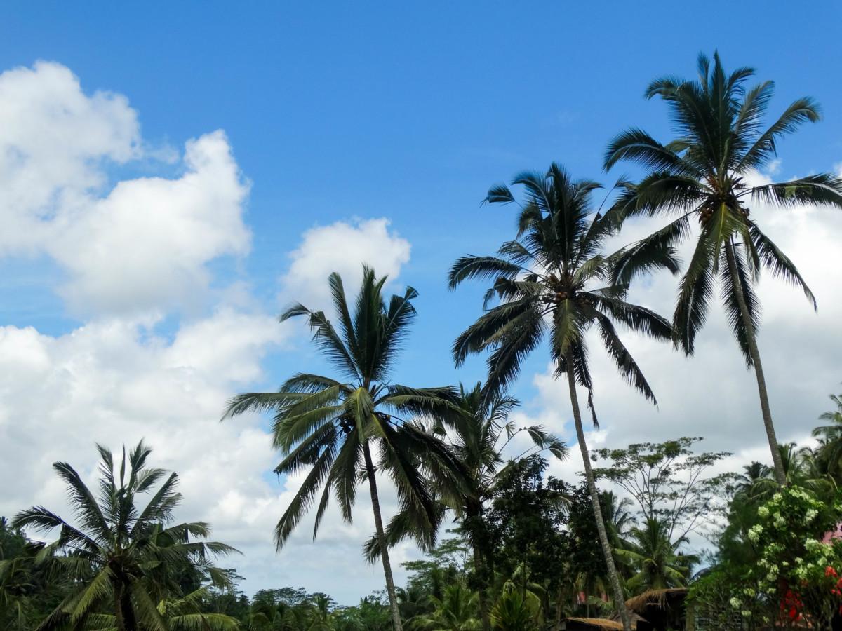 Palmieri Bali Vacanta