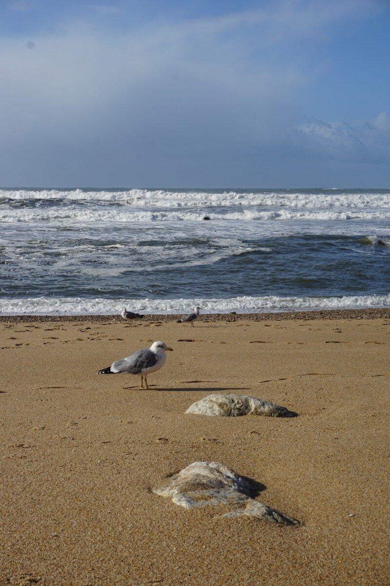 Porto Ocean Pescarus