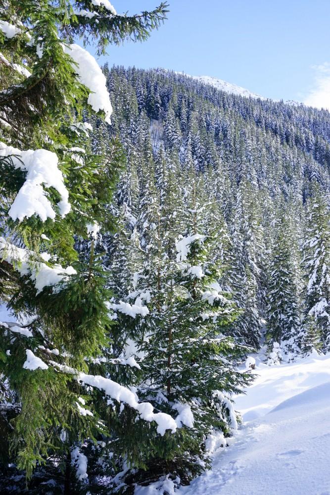 Valea Sambetei Brazi Iarna