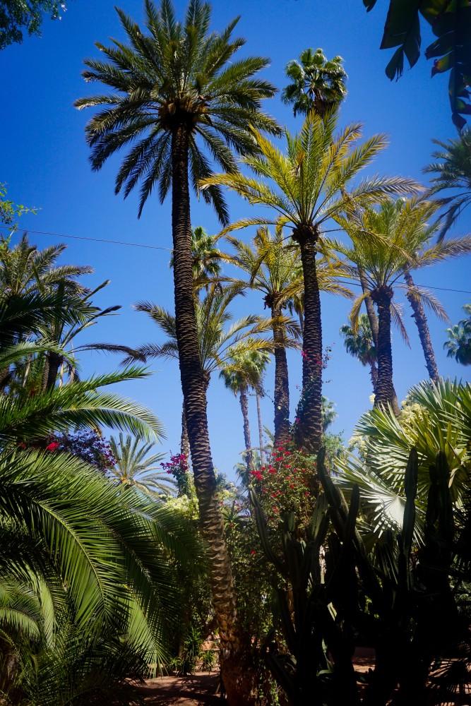 Jardin Majorelle Palmieri Maroc