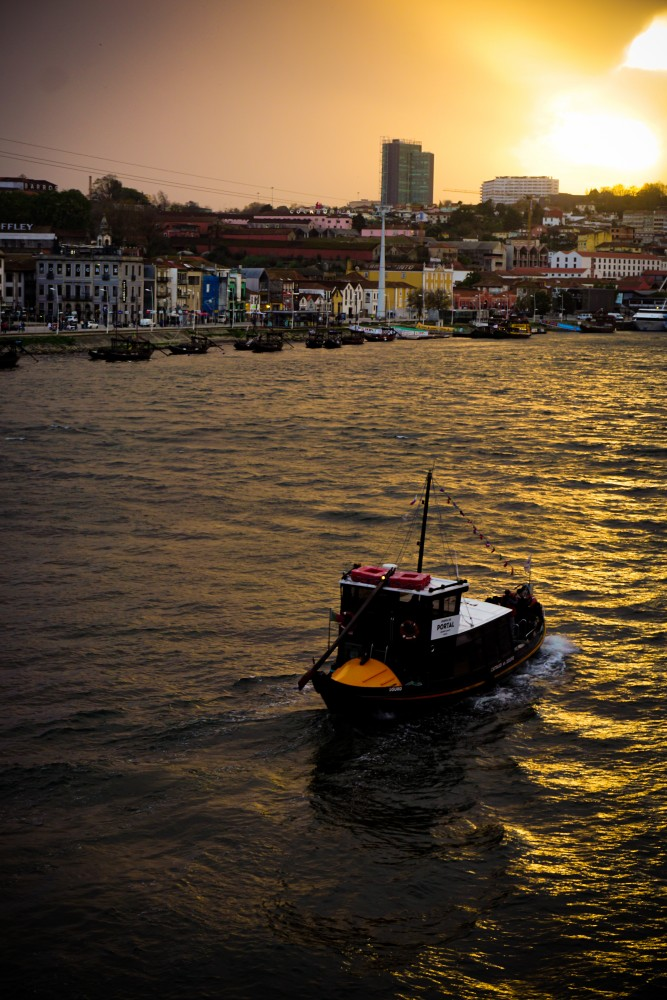 Apus Douro Porto Ribeira