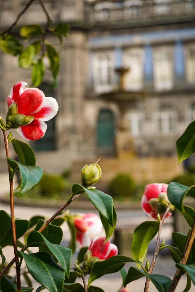 Flori Biserica Treimii Porto