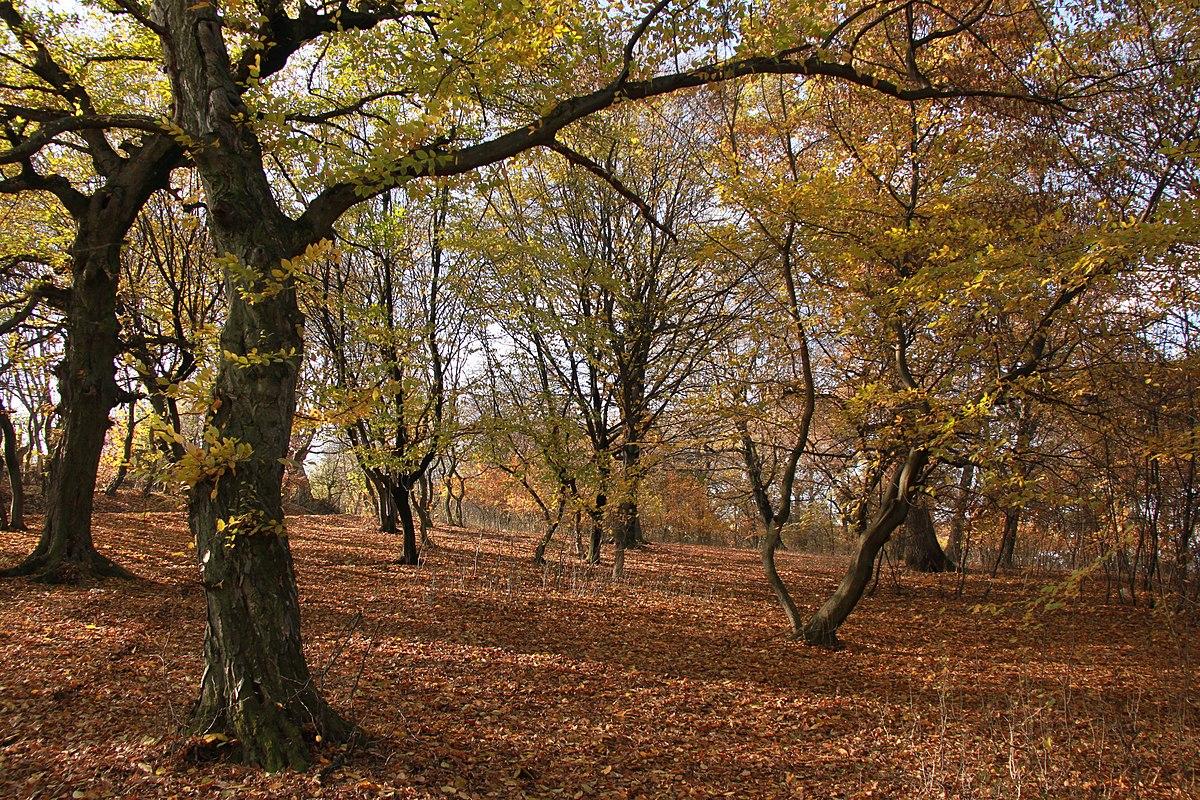 Padurea Hoia Baciu Romania