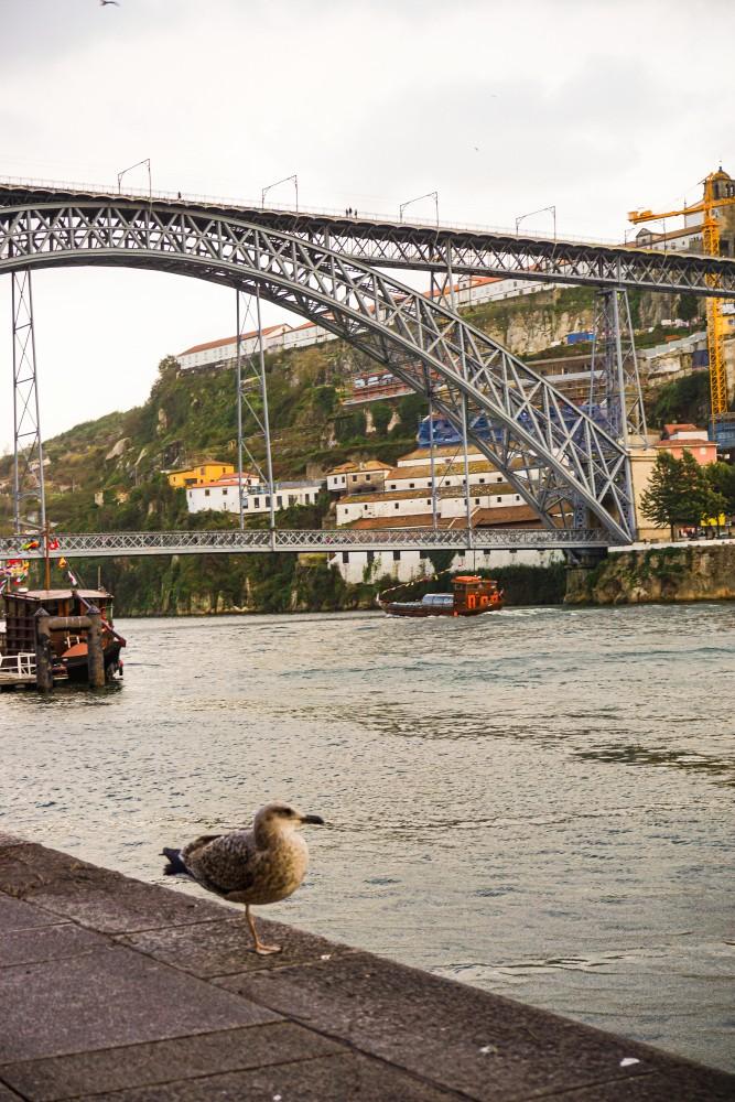 Porto Plimbare Ribeira