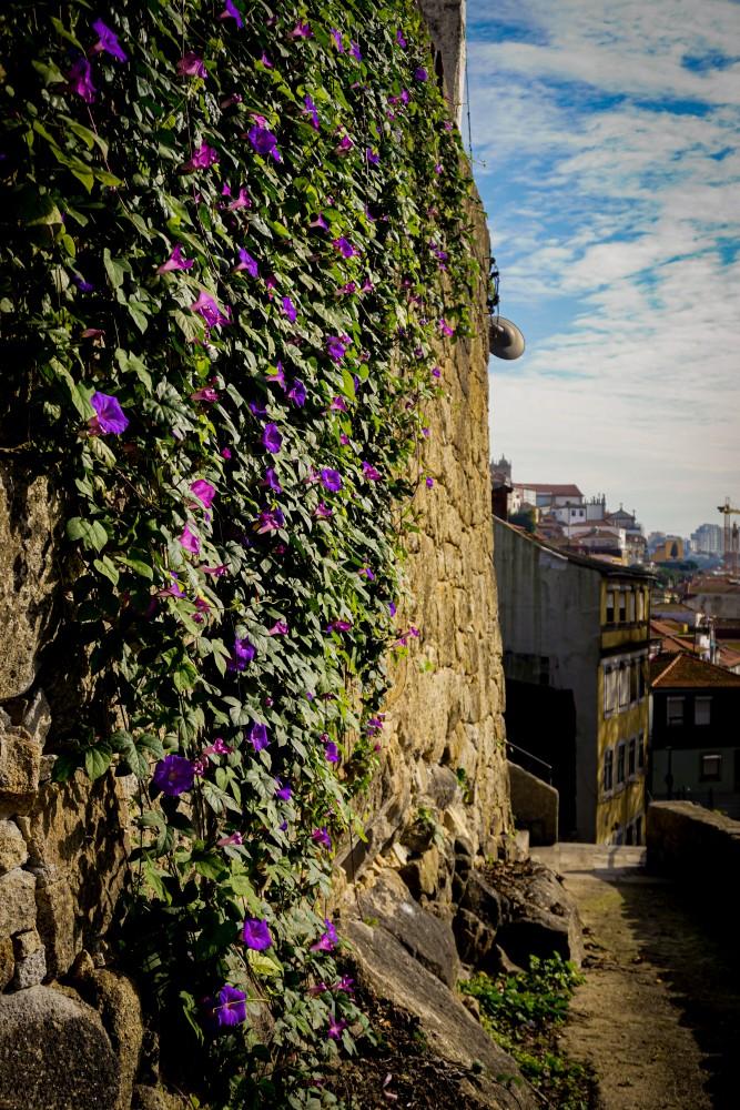 Porto Plimbare Vacanta Poze