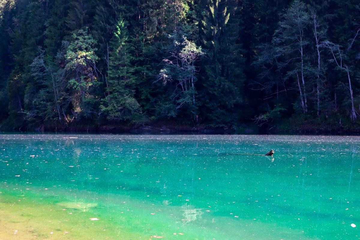 Scropoasa Lac