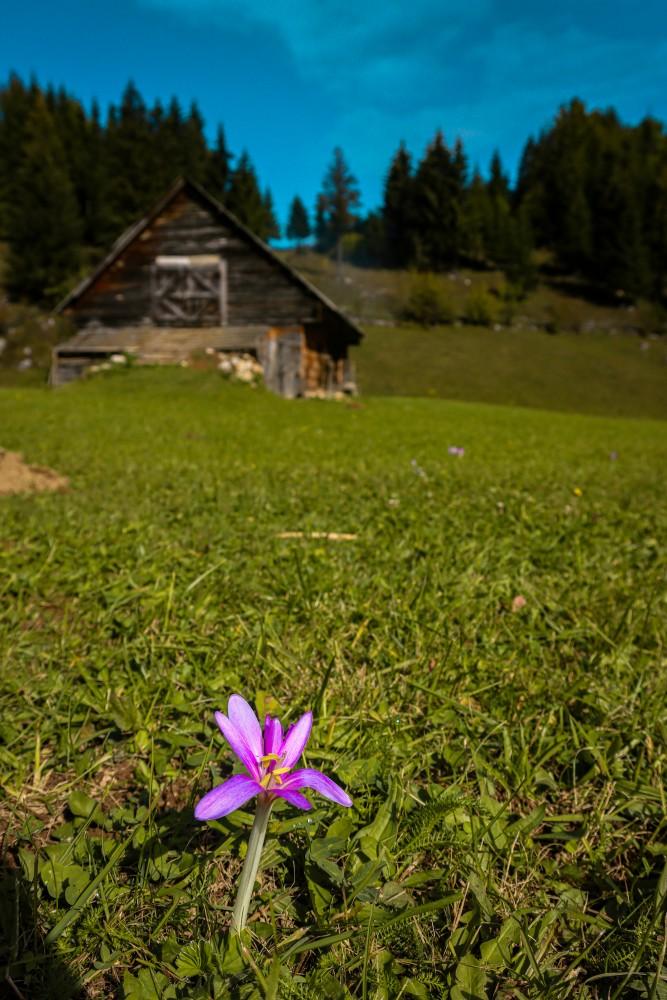 Flori Munte Moeciu
