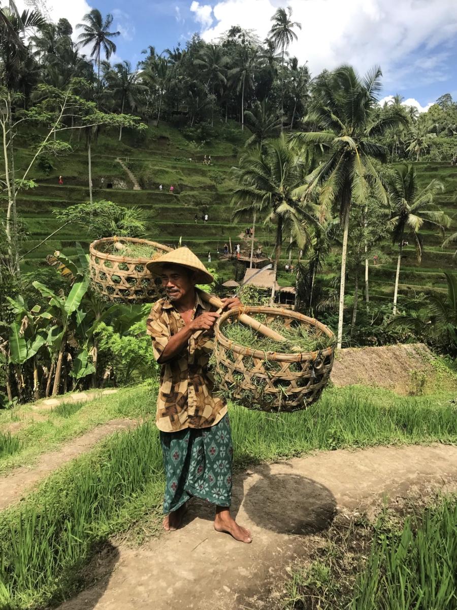 Bali Terase Orez
