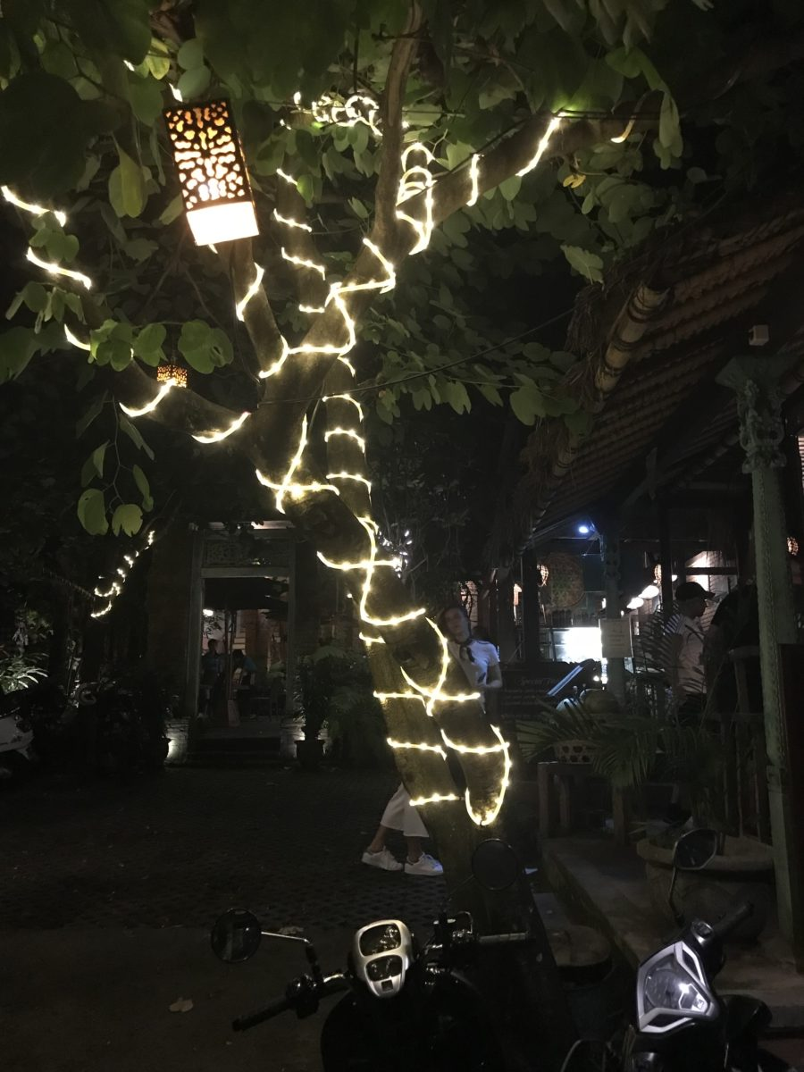 Copac Terasa Bali