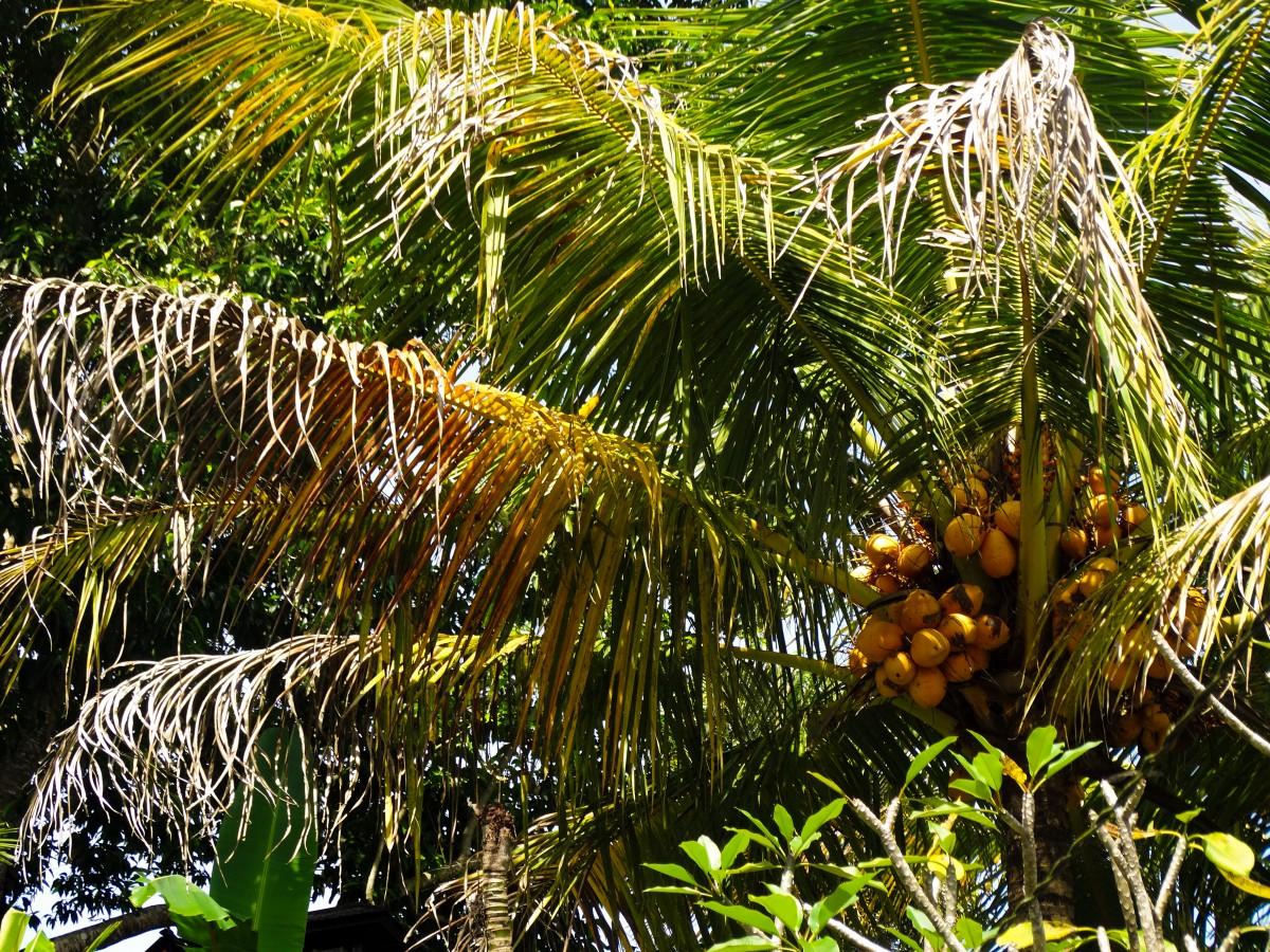 Gunung Kawi Templu