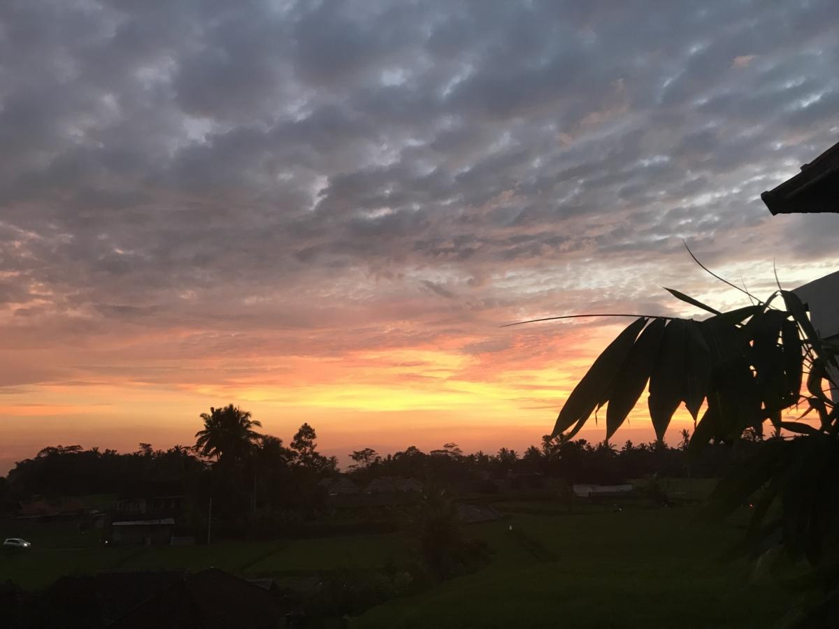Noapte Bali Palmier