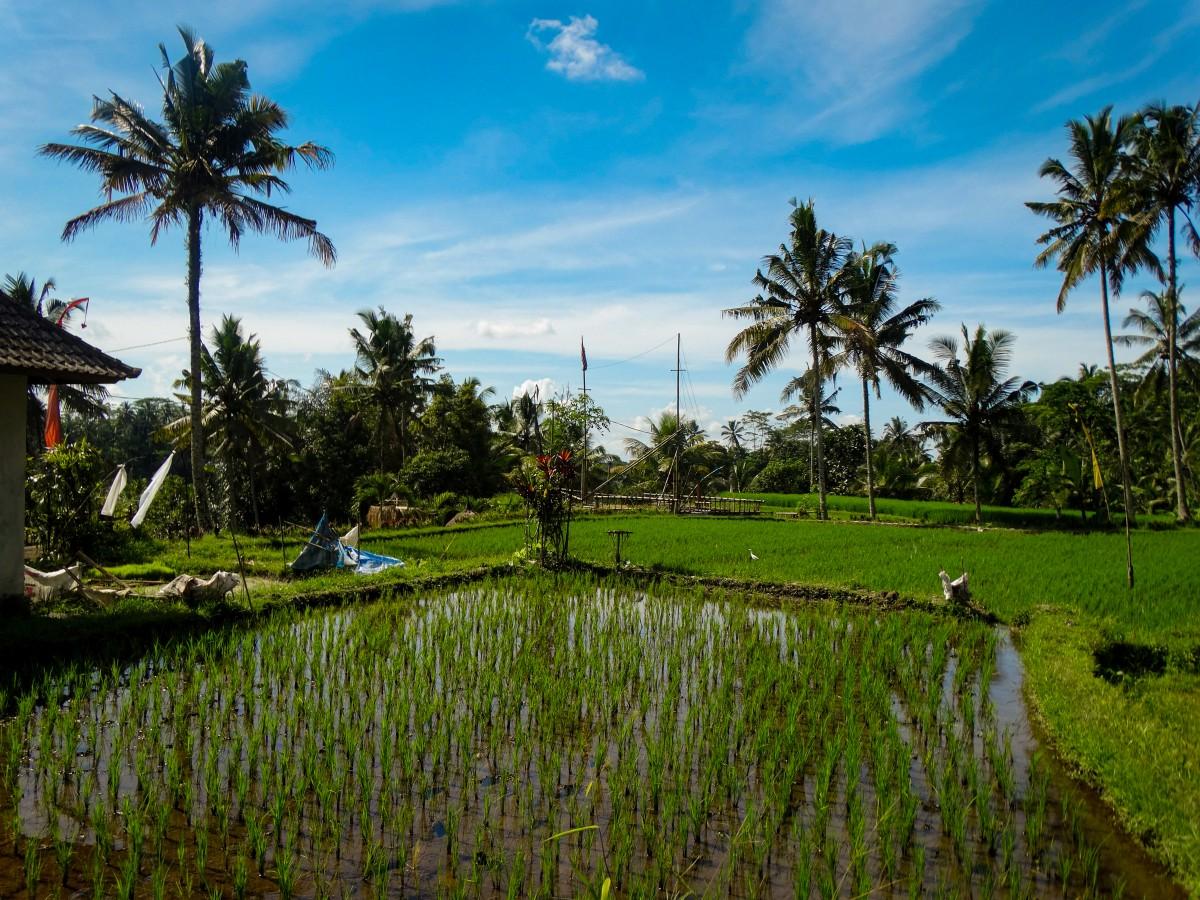 Terase Bali