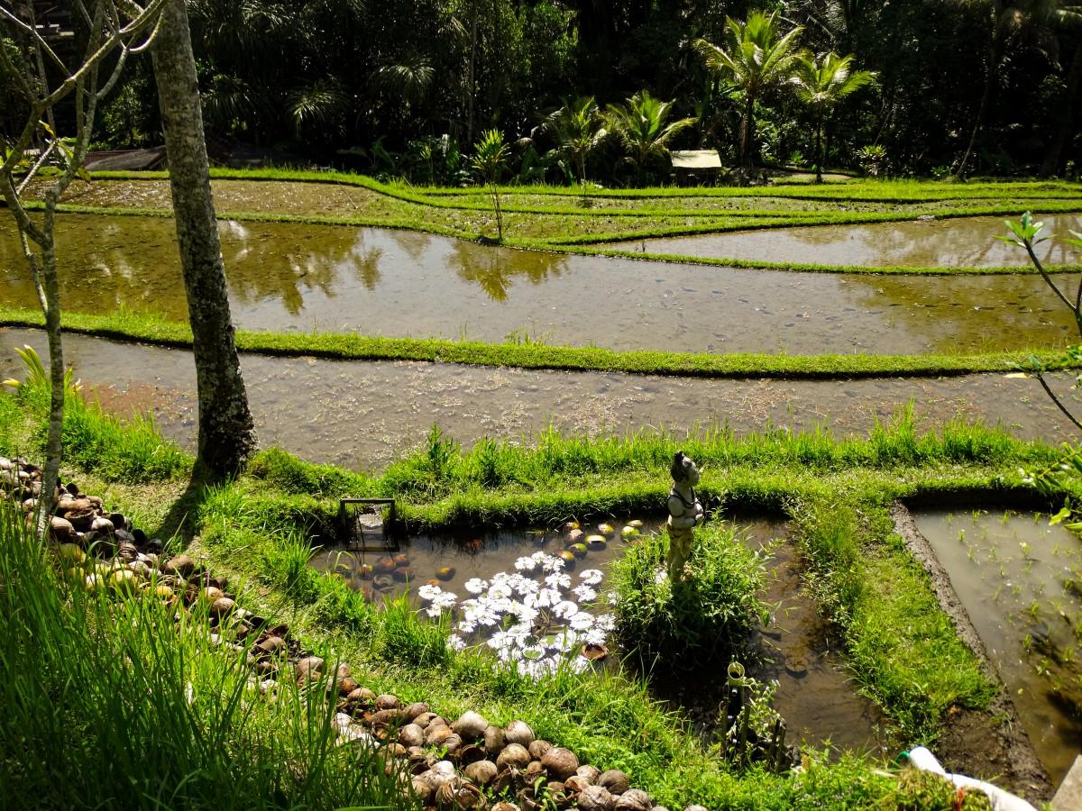 Terase Orez Bali