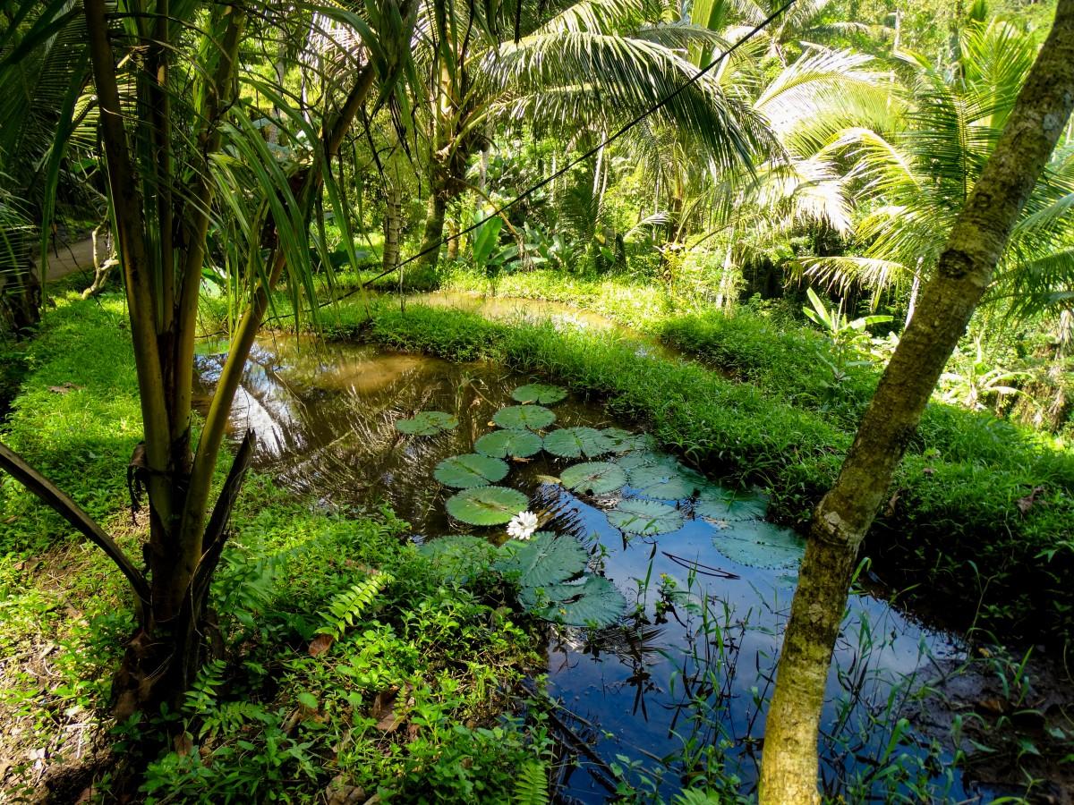 Tirtha Empul Bali Ghid