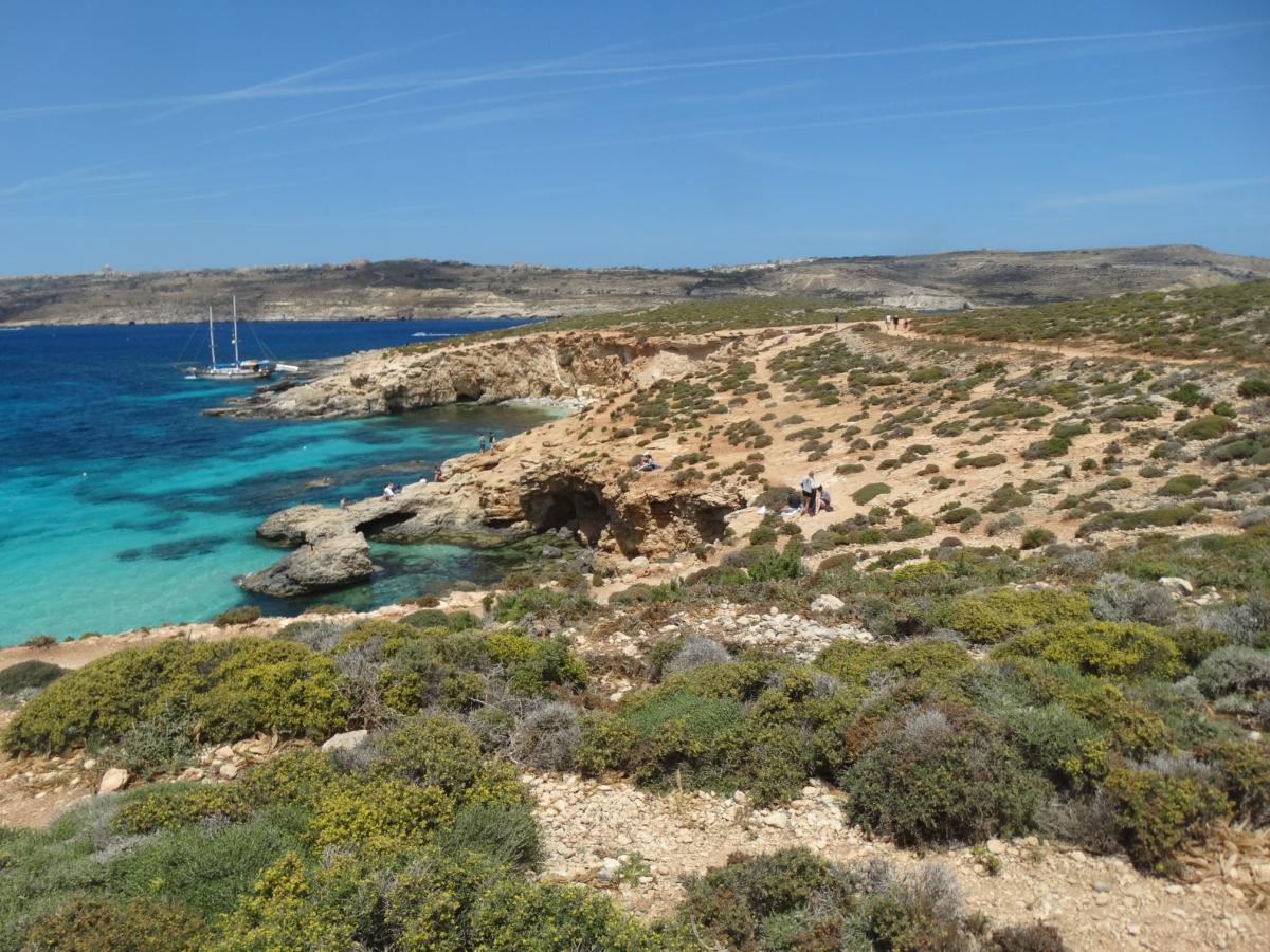 Vegetatie Comino Malta