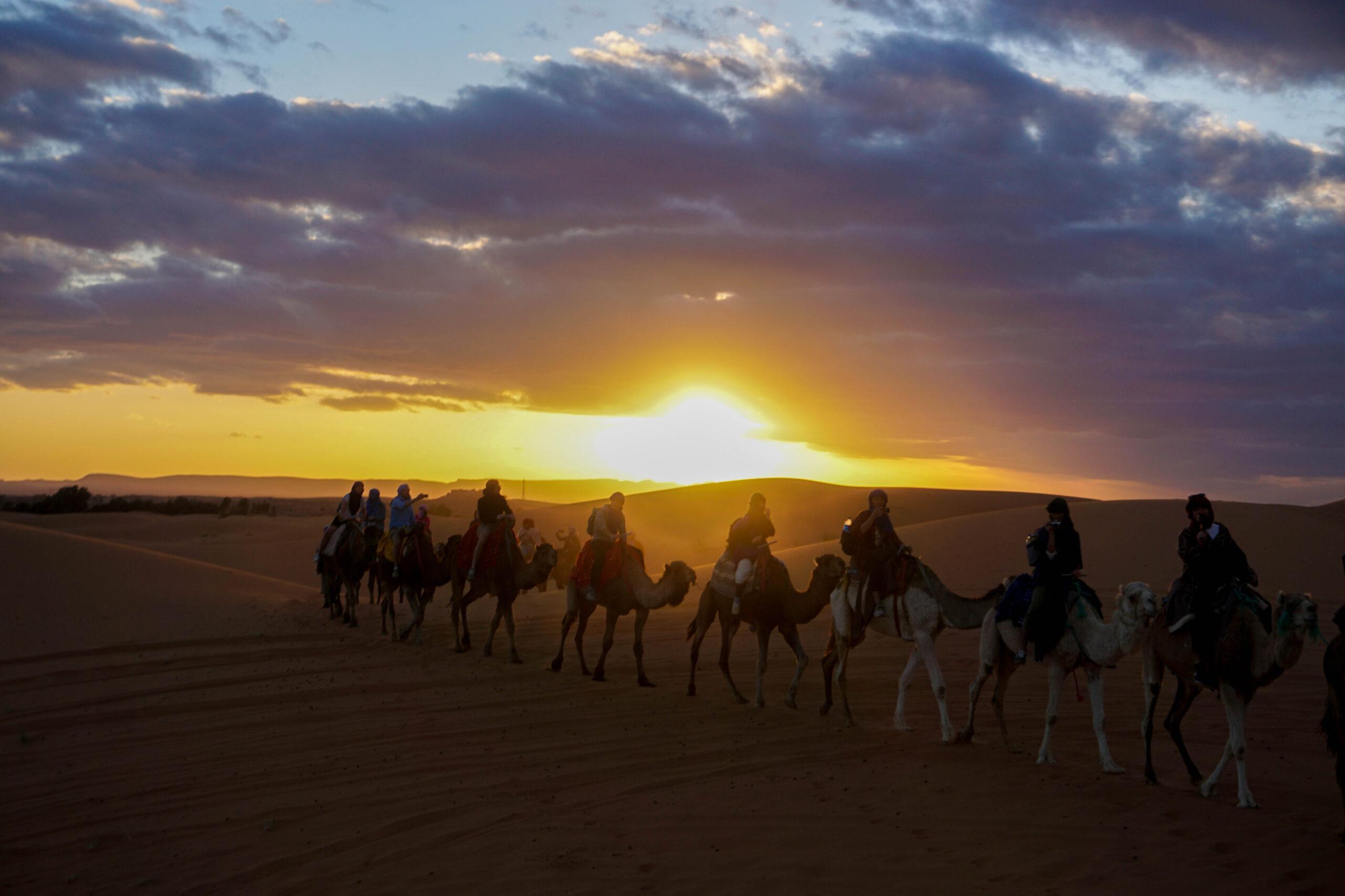 Apus Desert Sahara