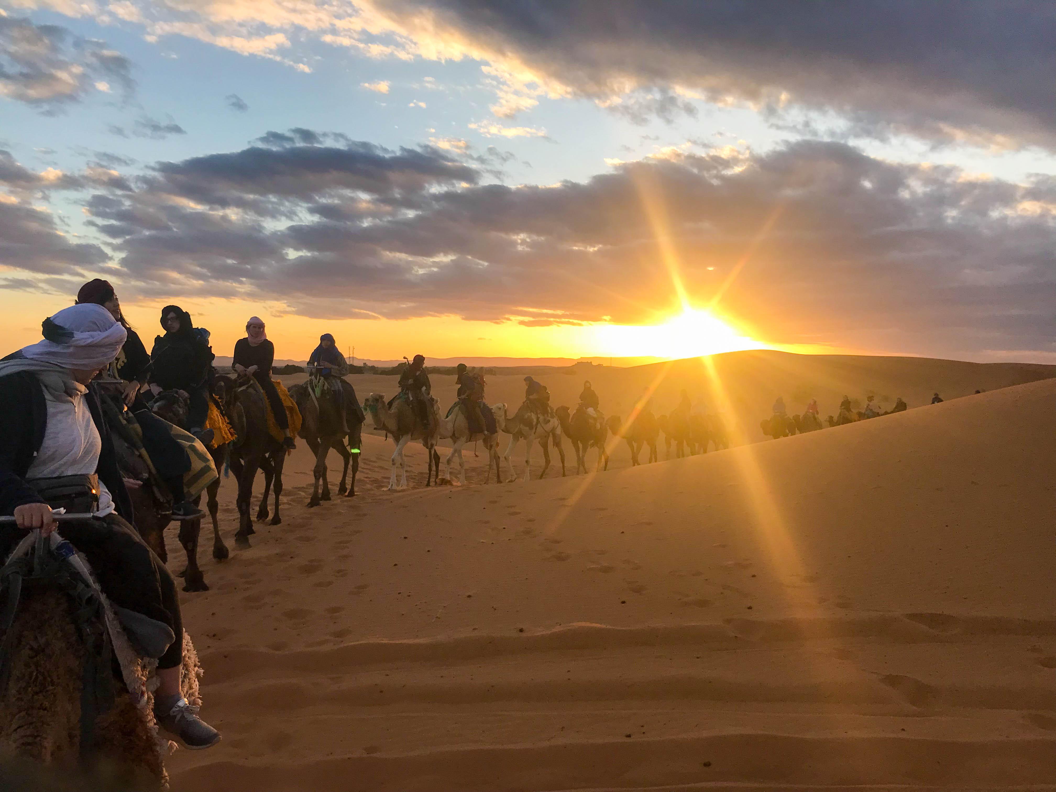Desert Camile Maroc