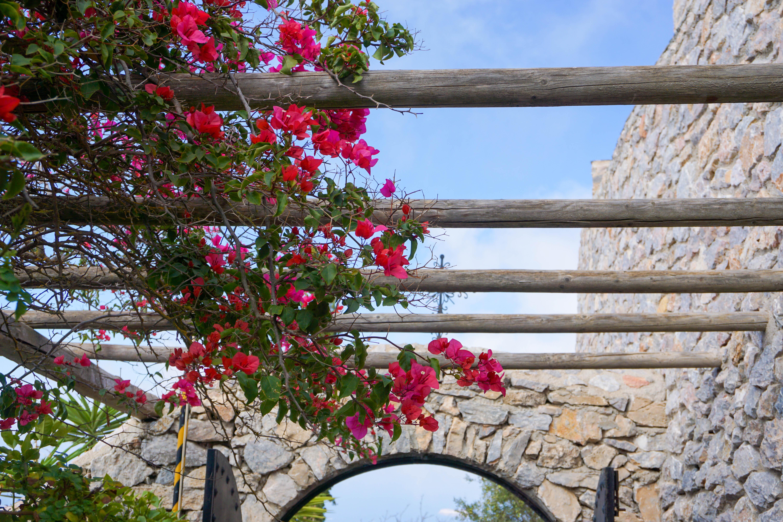 Flori Santorini