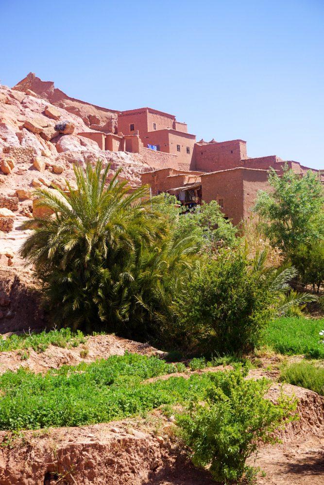 Maroc Vegetatie Muntii Atlas