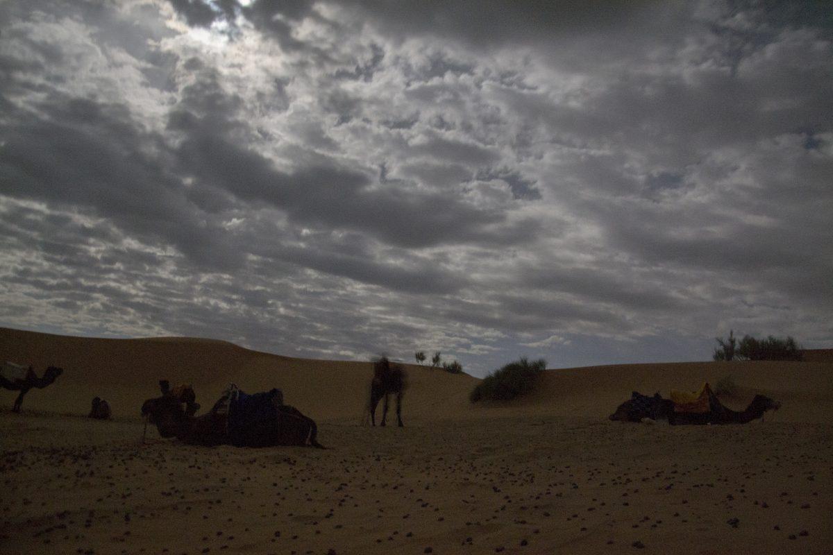Noapte Desert Camile