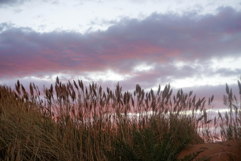 Rasarit Desert Sahara Maroc