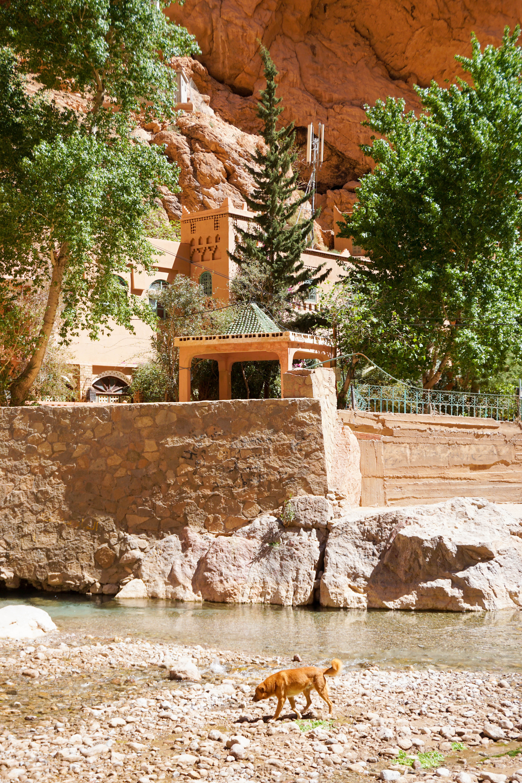 Todgha Gorge Maroc Canion