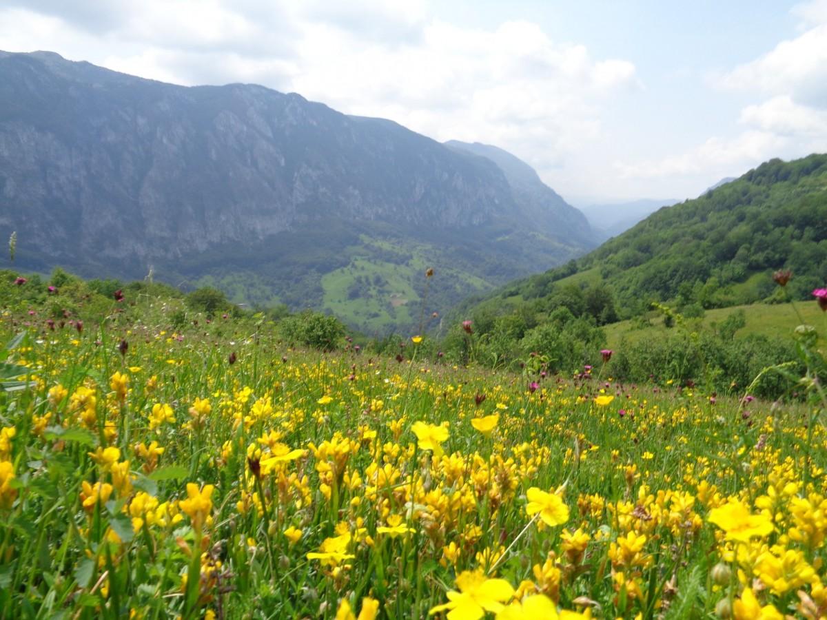Catunul Inelet Romania