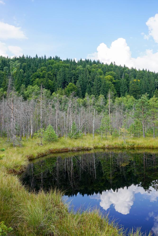 Lac Tinovul Mohos