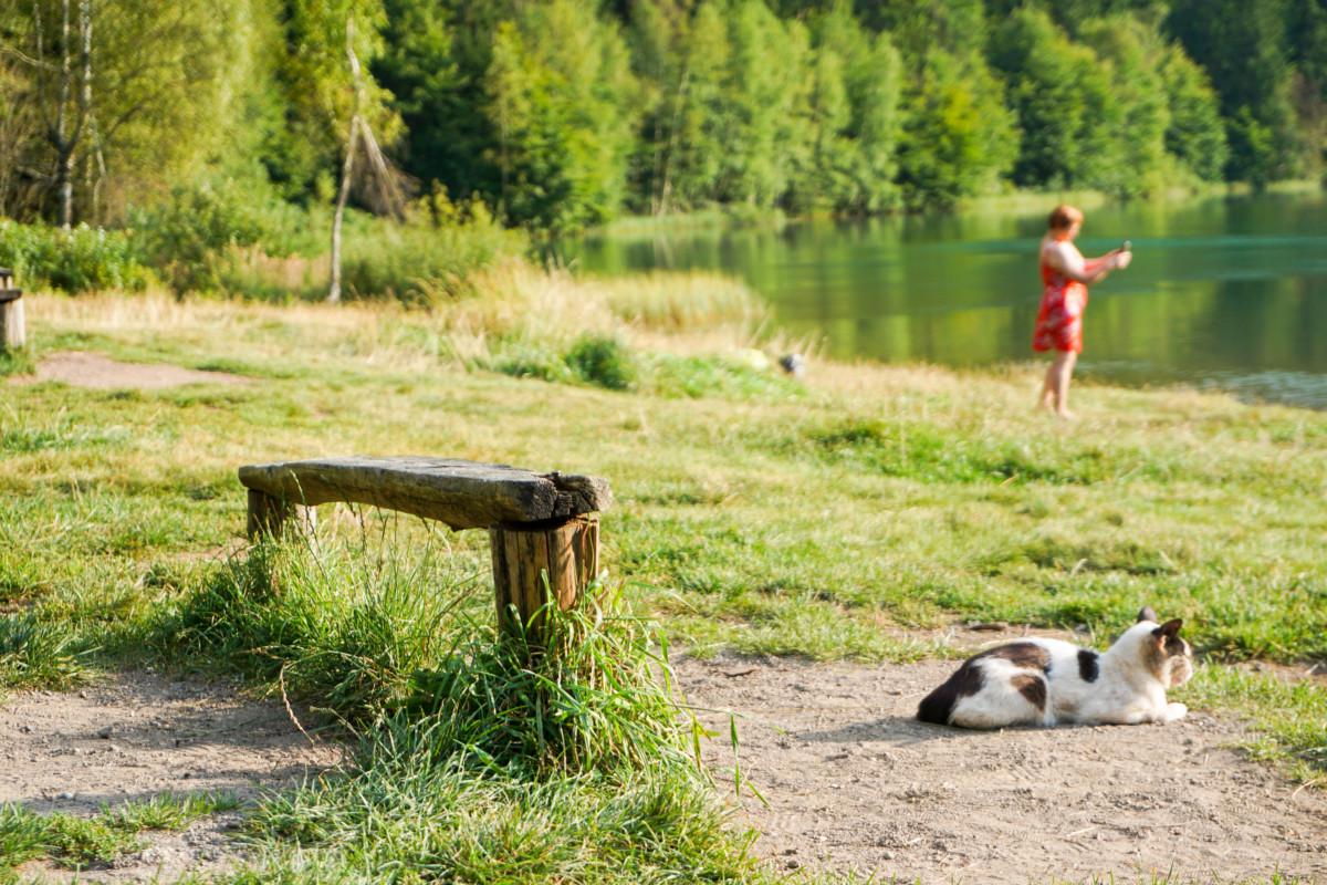 Pisica Lacul Sfanta Ana