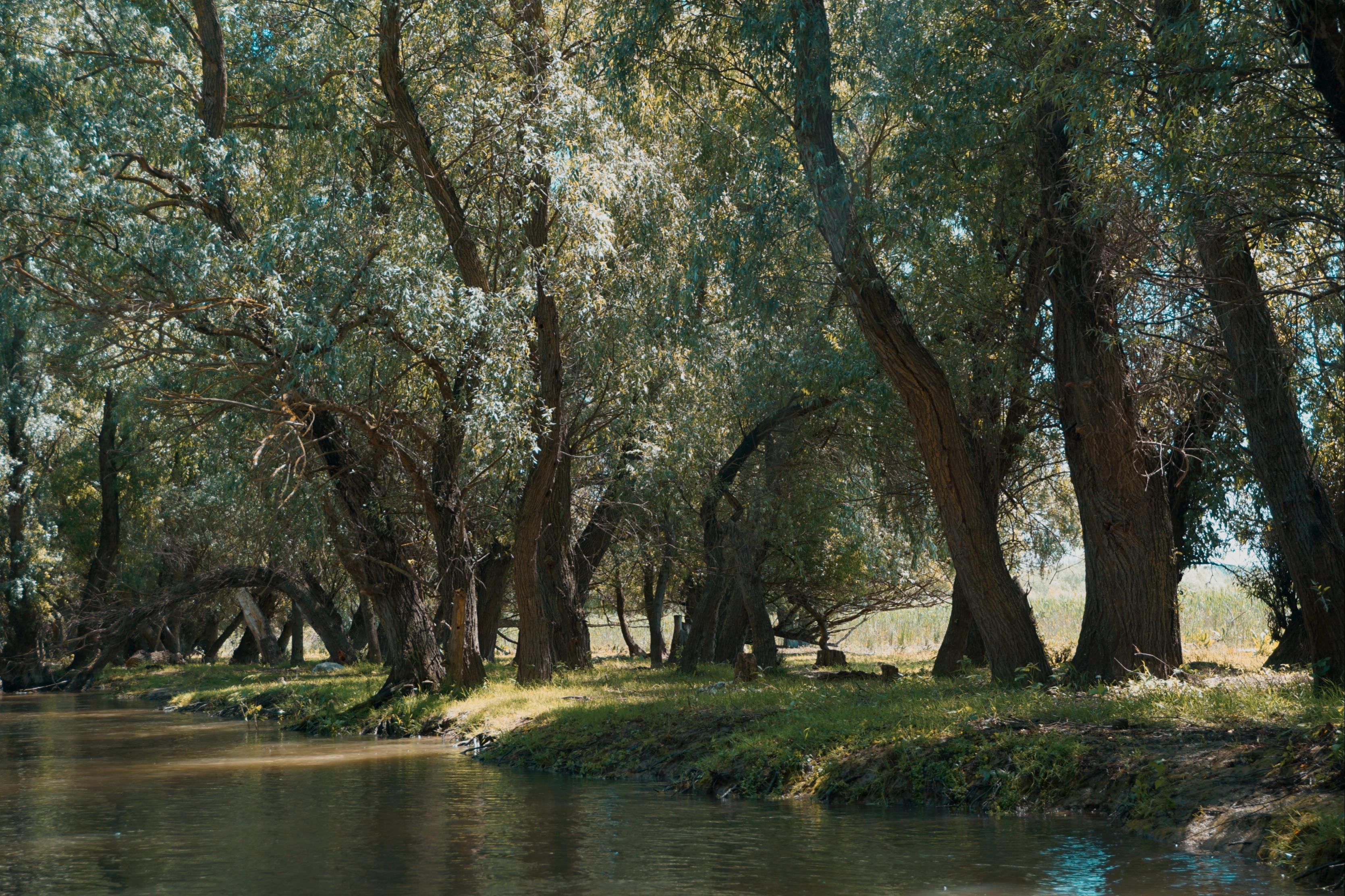 Flora Delta Dunarii Arbori