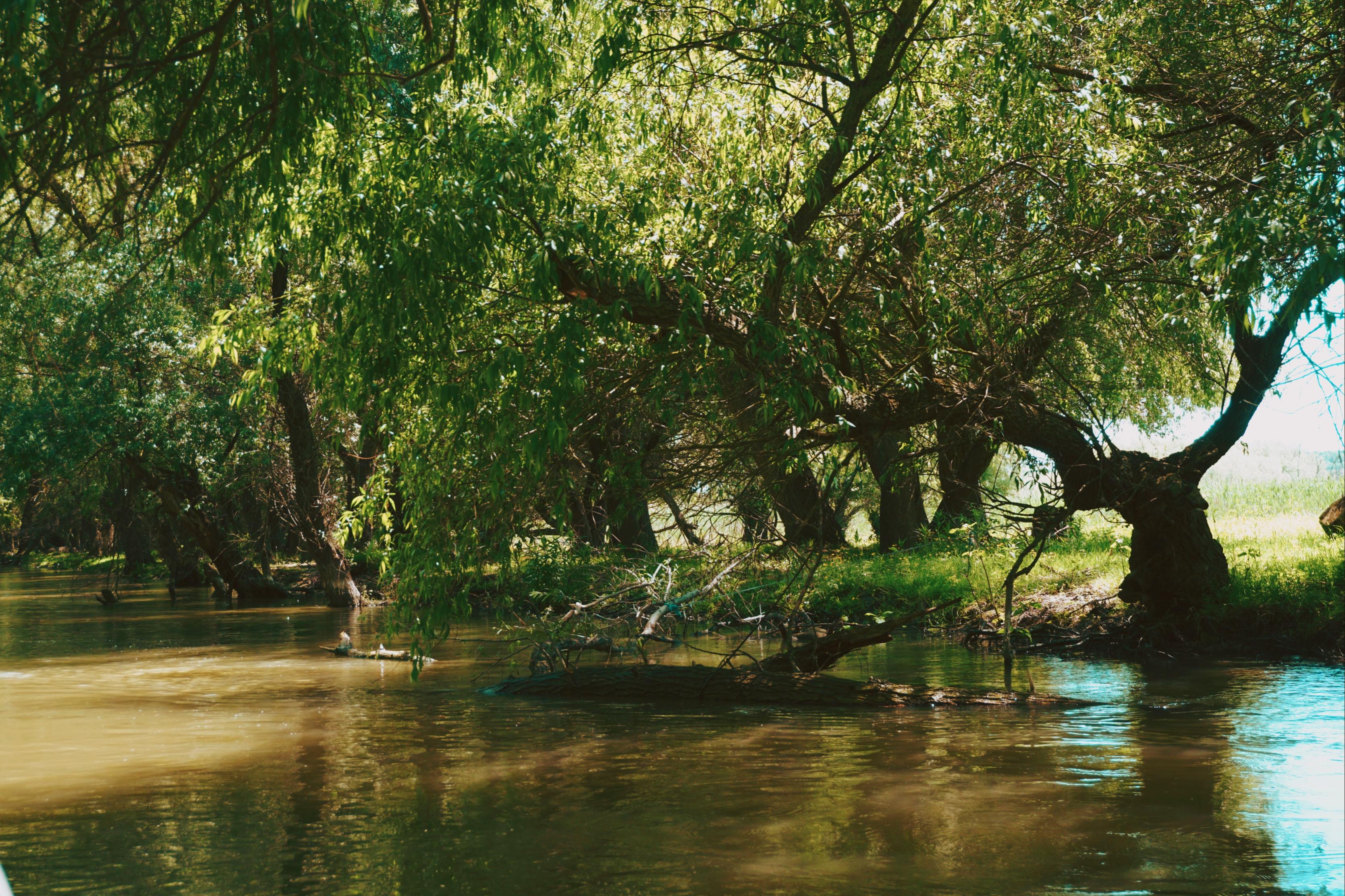 Lacuri Delta Dunarii