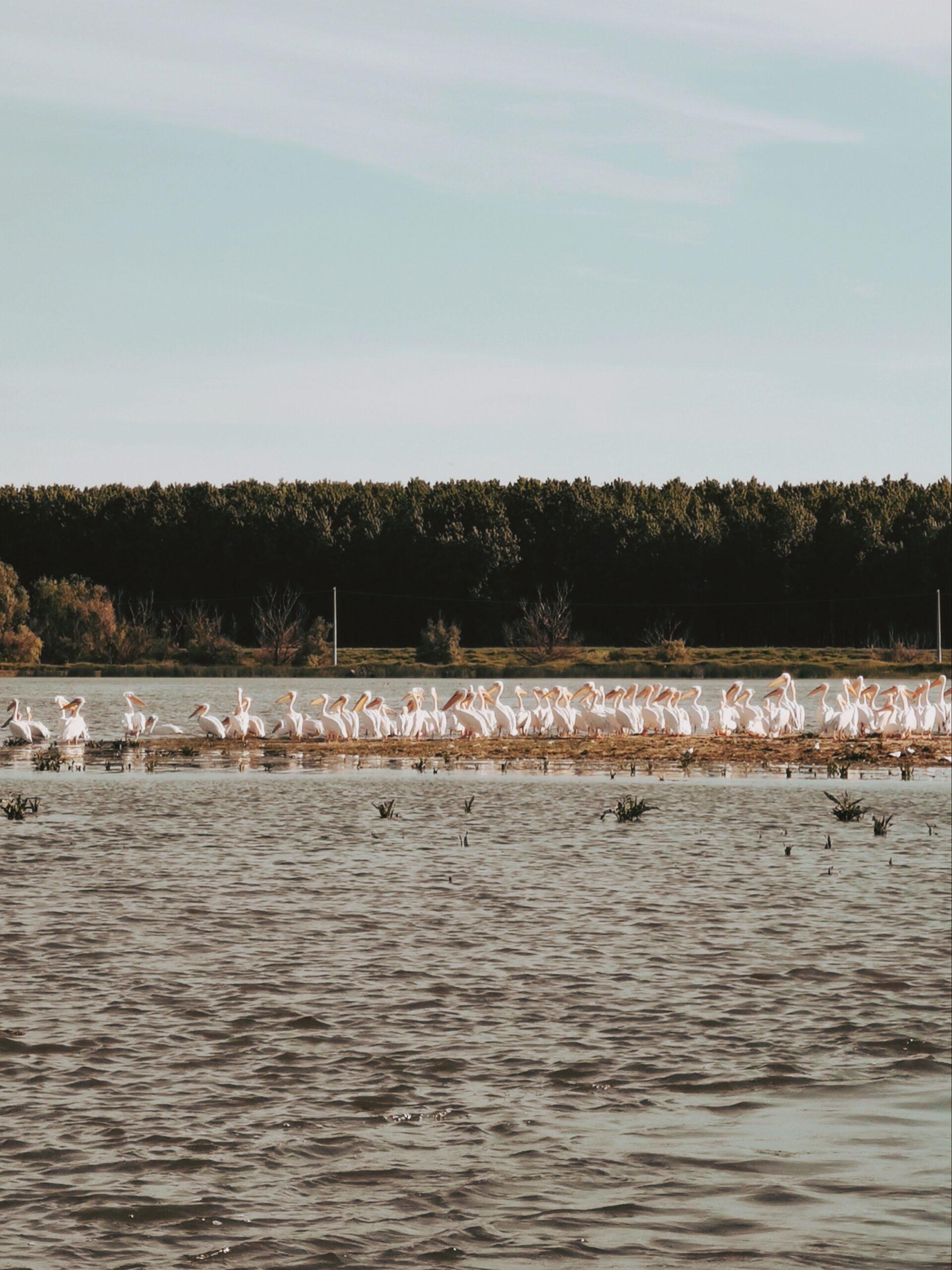 Pelicani Delta O zi Cat o Vacanta