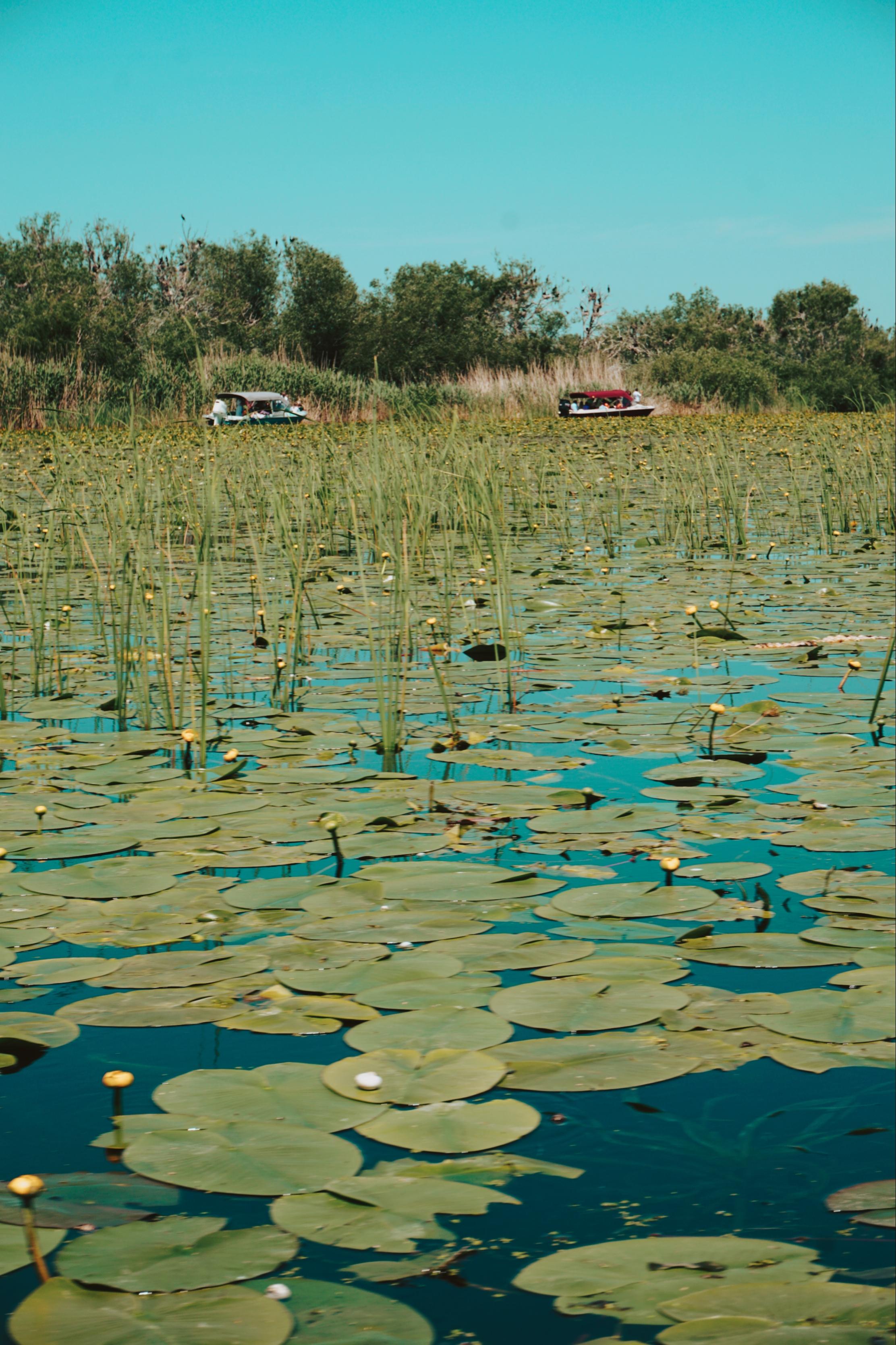 Salupe Delta Dunarii