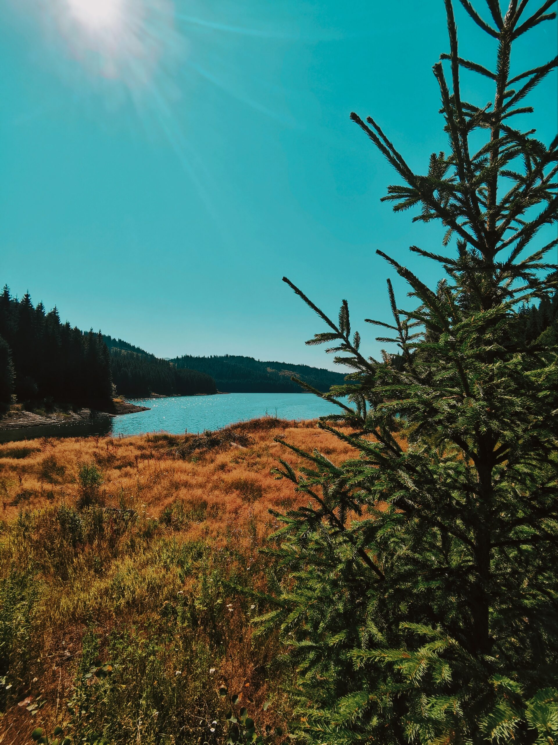 Lacul Vidra Popas Transalpina