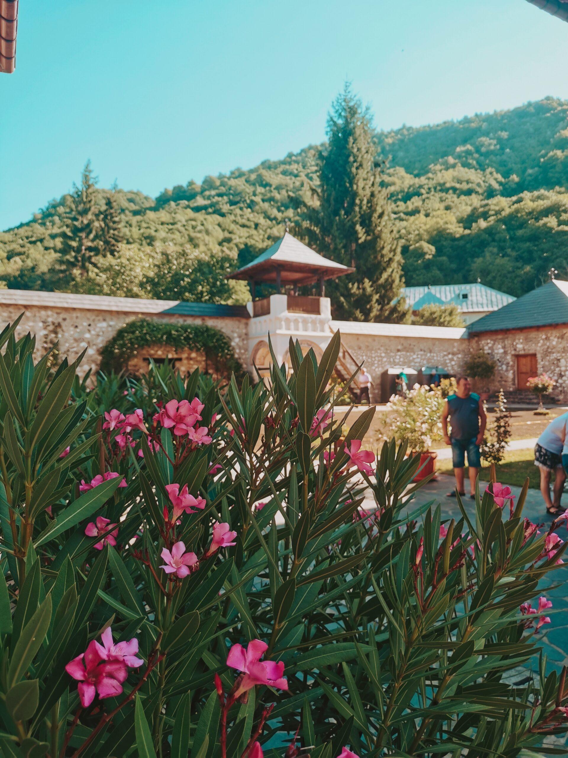 Manastirea Polovragi Flori