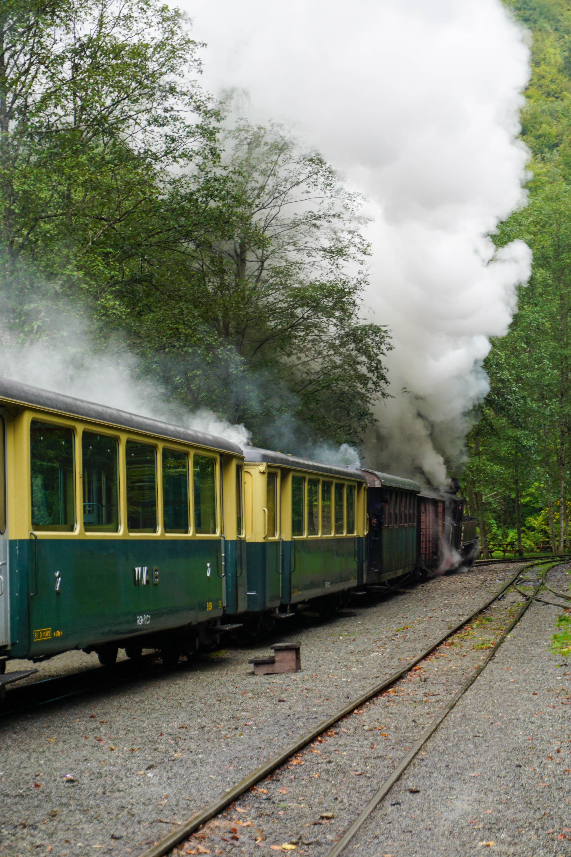 Tren Forestier